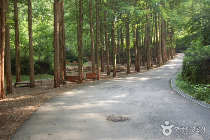 Jangtaesan Recreational Forest_4