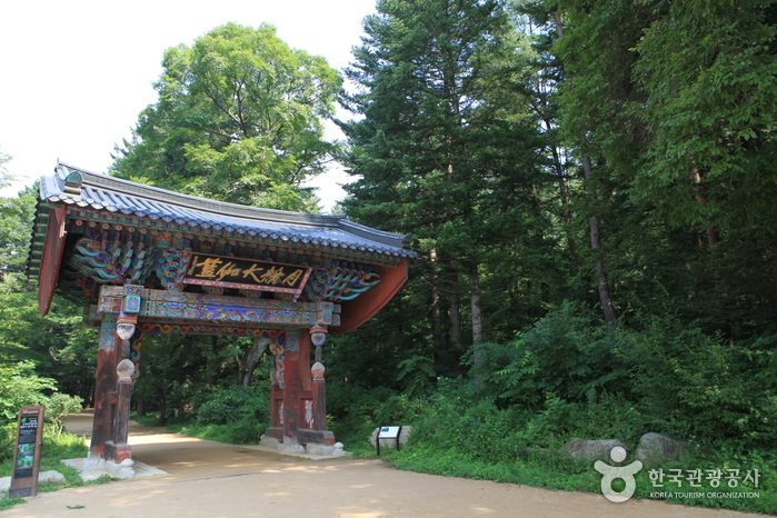 Woljeongsa-Temple-Fir-Forest-trails-1