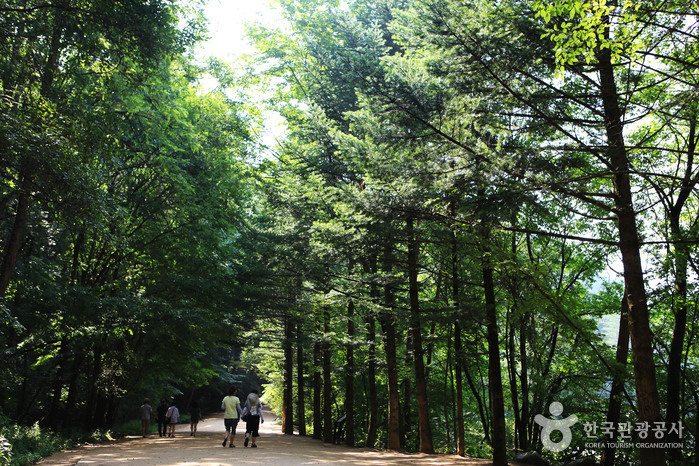 Woljeongsa-Temple-Fir-Forest-trails